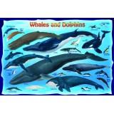 Banginiai ir delfinai