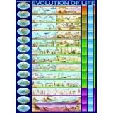 Gyvybės evoliucija