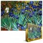 Irisai. Vincentas Van Gogas