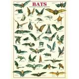 Šikšnosparniai