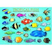 Tropinės žuvys