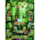Tropiniai Drėgnieji Miškai